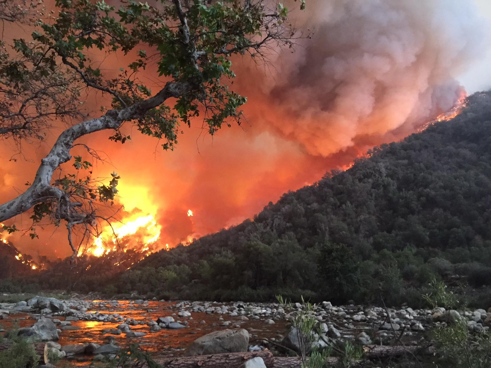 tree, riverbed, mountainside with flames and smoke in the background